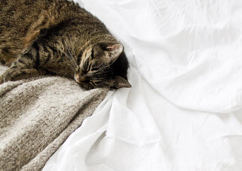 8 Common Dreams and What They Mean